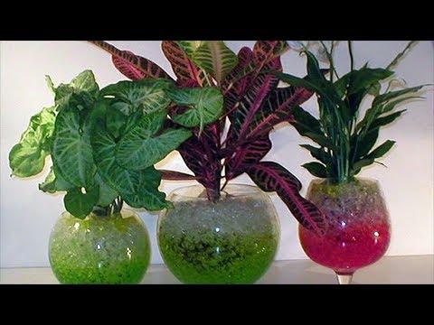 Гидрогель для растений. Что это и как его правильно использовать?