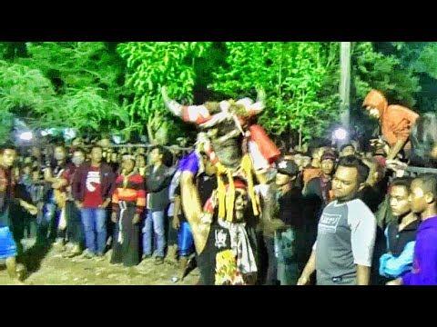 Solah Ganas Banteng Suro Gelut dng Penonton---Rogo Wijoyo  Live Mojokendil Ngronggot