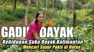 🔴Gadis Dayak Mencari Sayur Daun Pakis Di Hutan   Kehidupan Suku Dayak Pedalaman Kalimantan Barat