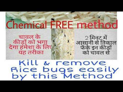 How to Kill and remove Rice bugs easily/चावल के कीड़ों को मारने का आसान तरीका