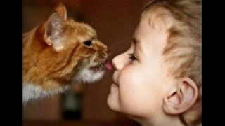 Рыжие коты и дети