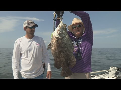 FOX Sports Outdoors Anchor Barry Stokes Catches Giant Tripletail at Mobile Bay Alabama