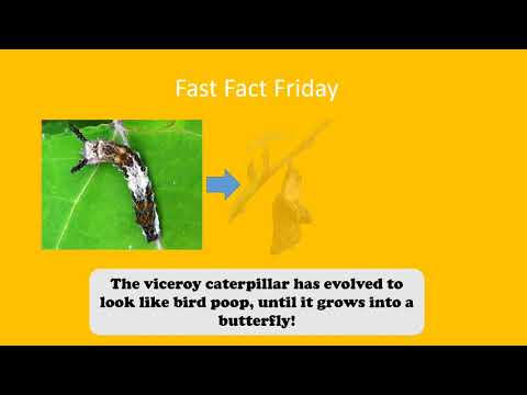 Fast Fact! 7/23/2021