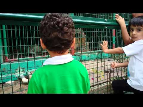 Dubai Zoo in Jumeirah. Шок!!!