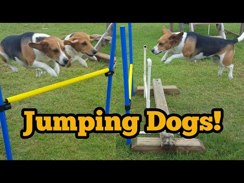 Jumping Practice! | Chubby Jumpers