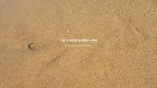수면유도 | 가을 | 만리포 ✦ 모래갯벌의 소라게 꼼지…