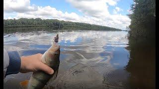 ПОПАЛ НА ЖОР ОКУНЯ ПОСЛЕ ДОЖДЯ    Рыбалка на Оке   Отводной поводок