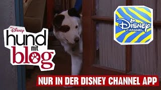 HUND MIT BLOG - Nur in der Disney Channel App! | Disney Channel