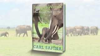 Carl Safina discusses his book 'Beyond Words: What Animals Think and Feel.'