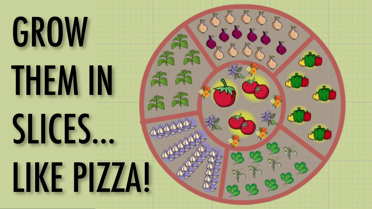 how to grow a pizza garden