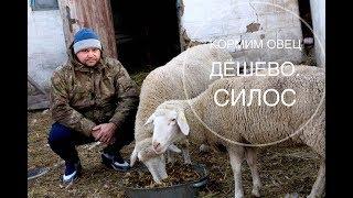 кормим овец дешево. Силос