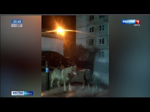 Волки из Казахстана