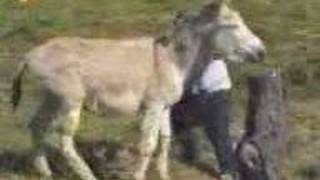 Man chased by horny Donkey