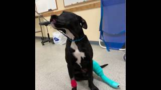 Jessie post surgery short video