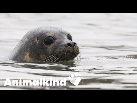 Happy and healed, seals bounce back to the water | Animalkind
