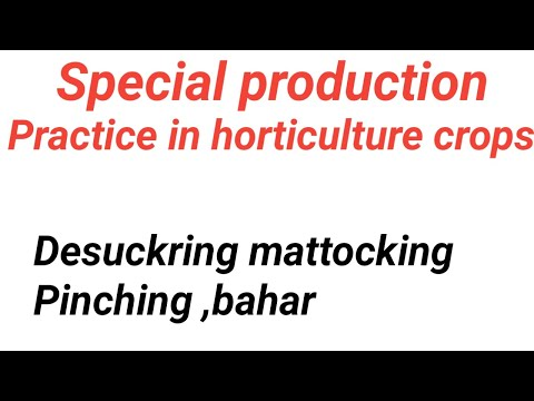 Special production practices in horticulture crops