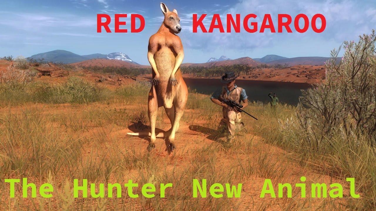 The Hunter New Animal Red Kangaroo Youtube