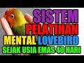 Cara Cepat Melatih Mental Lovebird Sejak Usia Muda Sistem In Out Dominan  Mp3 - Mp4 Download