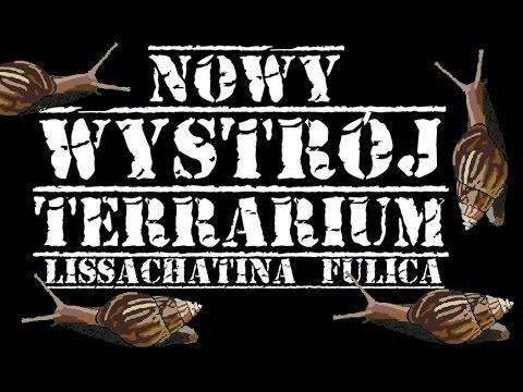 [Update] Ślimak olbrzymi (Lissachatina fulica) - nowy wystrój terrarium