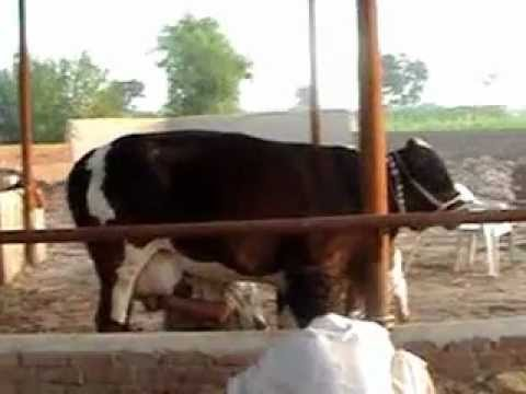 how to get loan for dairy farm in pakistan