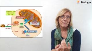 Biología: Respiración celular y Fermentación (12/09/2018)