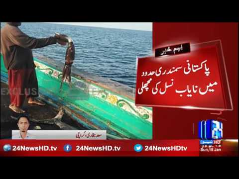 Rare breed of fish in Pakistani maritime boundary