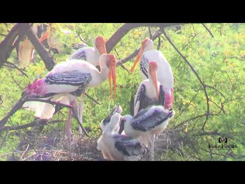 Bharatpur Bird Sanctuary - Keoladeo National Park, Rajasthan