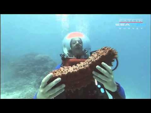 Underwater Classroom - Sea Cucumber - Coral Oceans