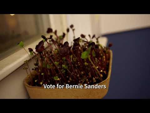 Purple Microgreens Timelapse - OP-Z Music Video
