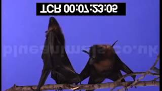 Bats Right Side Up