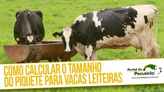 Como calcular o tamanho do piquete para vacas leiteiras