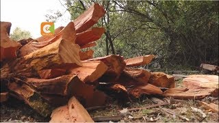 Gov't issues a three-month ban on logging