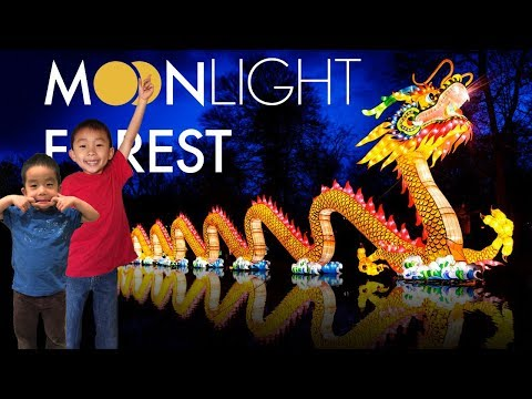 Moonlight Forest At LA County Arboretum In Arcadia (Chinese Lantern Festival)