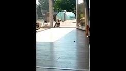 Dog thinks terrace door is closed (Original)