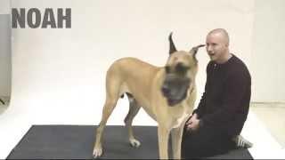 Реакция собак на человеческий лай | Reaction on the human barking dogs