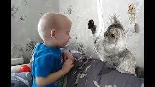 Малыш ругает кошку за порванные обои Кошка дала в нос ребенку Дети и Домашние Животные Прикол