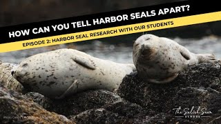 RESEARCH: How do students help us with marine research?