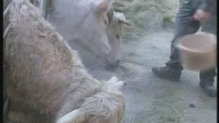 Les éleveurs en difficulté économique (Auvergne)