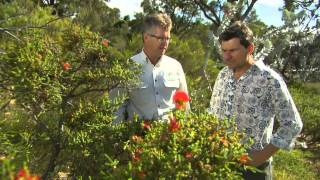 The Garden Gurus WA Easter Special - WA Native Plants