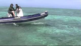 Zodiac Pro dive boats
