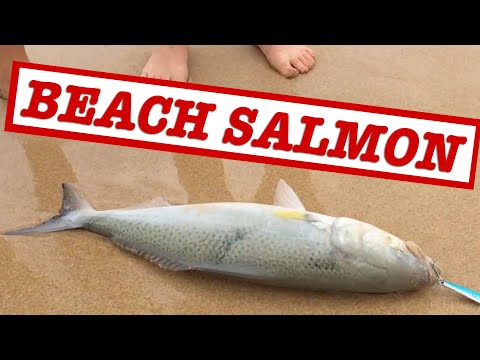 How To Catch Australian Salmon Off The Beach (Fishing Australia)