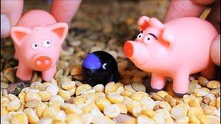 Мультик про животных 2018 - Про домашних и диких свиней