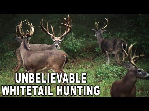 #1 TEXAS Whitetail Hunting Destination!
