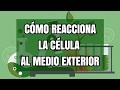 Laboratorio: Cómo reacciona la célula a las sustancias del exterior