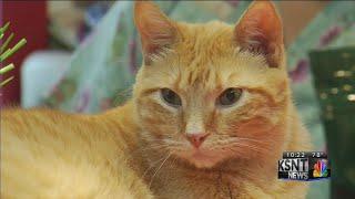 Cat Association of Topeka