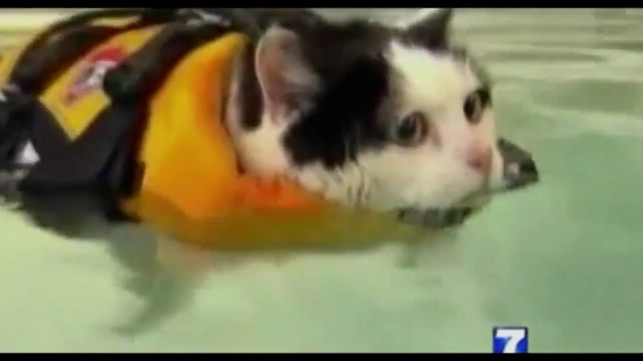 ccd0748014 News Anchor Cracks Up On Swimming Cat Piece - YouTube