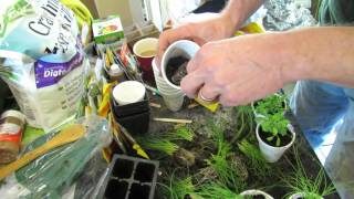 Transplanting Seed Start Chives & Herbs into Cups: Have a Plant Yard Sale! - TRG2016