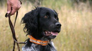 Versatile Hunting Dogs | Minnesota Bound