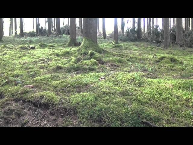 ruta de senderismo por el Parque Natural Des Deux Ourthes en las Ardenas Valonia - Bélgica