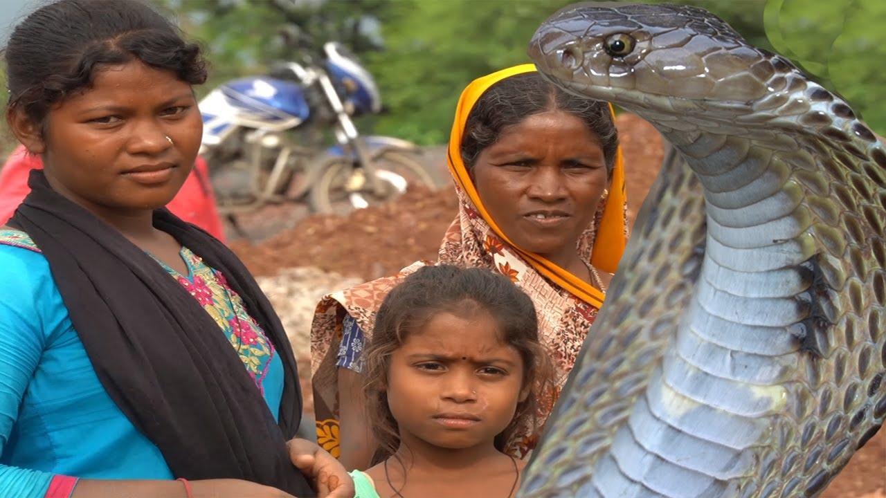 जहाँ कोबरा रहता था देखिये मजदूर परिवार उसी जगह पे किस तरह रहते थे |Venomous Snake,Cobra Rescue in CG